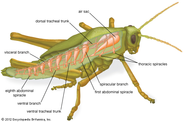 New Page 1 – Grasshopper Dissection Worksheet