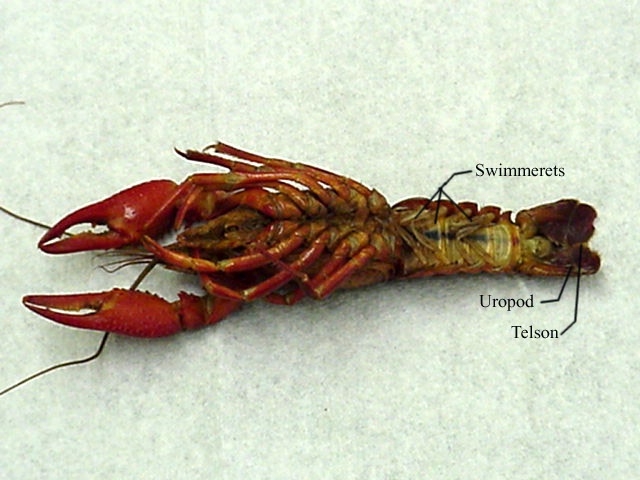 how to cook crayfish legs